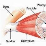 Pengobatan Non Medis untuk Perbaikan Struktur Otot